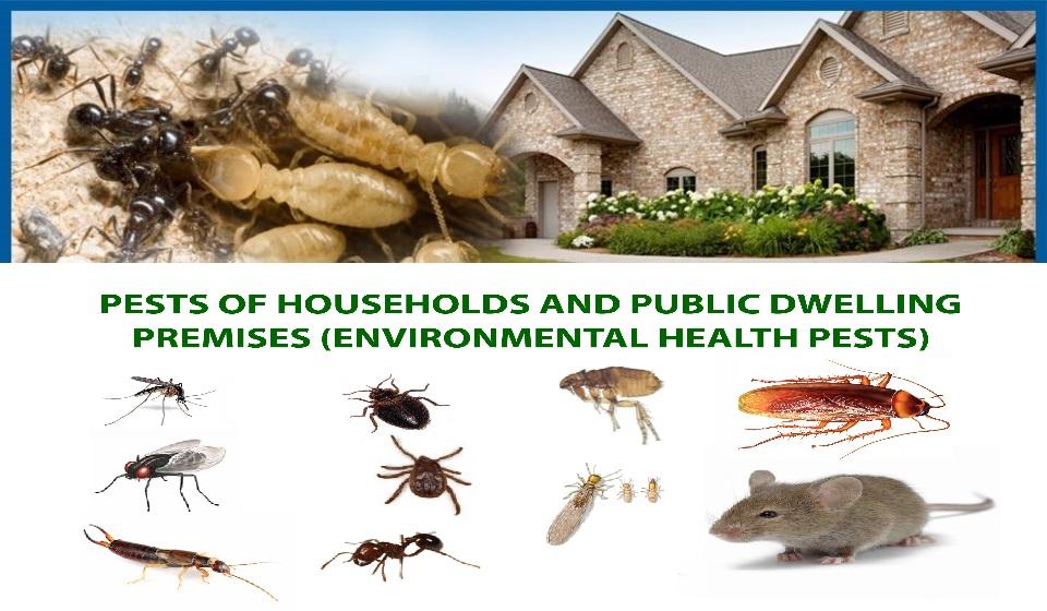 Pest Control Pasadena, CA