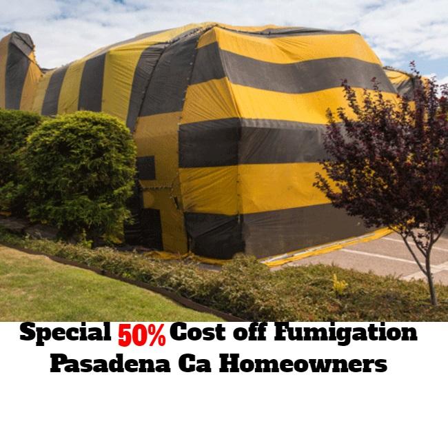 Exterminator For Termites