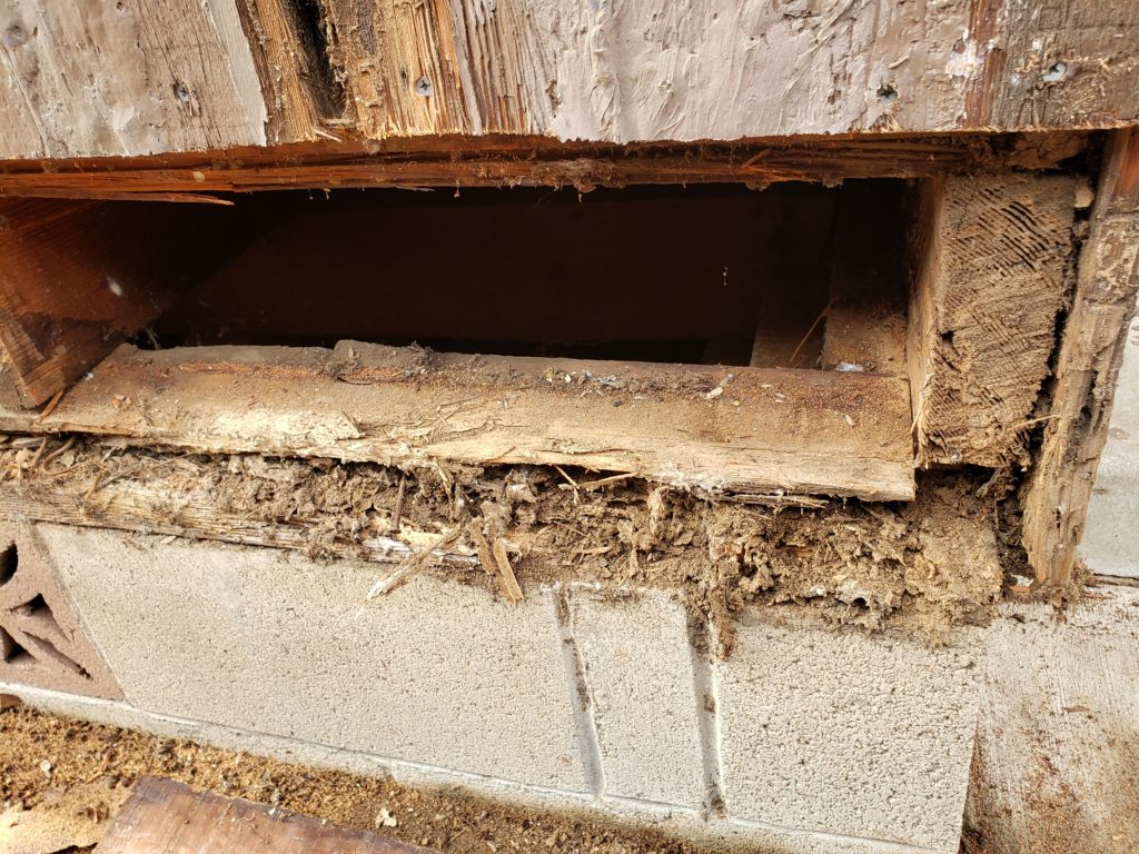 Major Structural Termite Damage