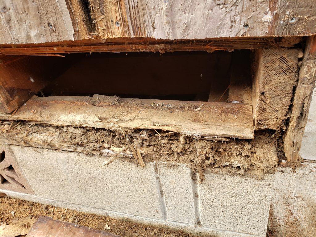 Major Structural Termite Damage